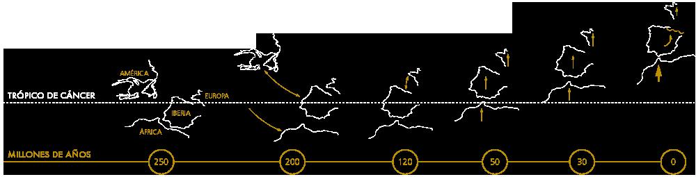 La deriva de los continentes